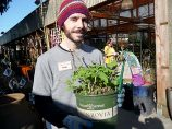 """Josh Maxwell, a Garden Fever nursery employee, says the fruit from the raspberry variety """"Short Cake"""" is very tasty. It grows two to three feet tall, does well in a patio container and is thorn-less. """"I have a 3-year-old and a 1-year-old,"""" he said. """"They aren't ready for thorny vines."""" (Janet Goetze)"""