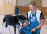 Oregon Humane Society volunteer Marilyn Happold-Latham, point person for K9 Nose Work, an enrichment activity for shelter dogs to seek and find smelly treats, works with Brogan, a nine-year-old Husky-Shepherd mix, recently adopted from OHS. (Judy Nelson)